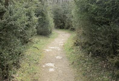Boxwood Labyrinth